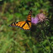 Wildflower Monarch Art Print