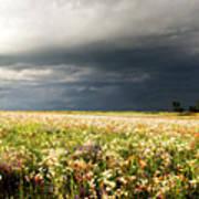 Wildflower Panorama 2008 Art Print