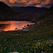 Wildflower Sunset At Summit Lake Art Print