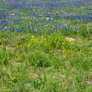 Wildflowers - Blue Horizon Three Art Print