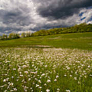 Wildflowers And Storm Clouds Art Print