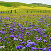 Wildflowers Carrizo Plain National Monument Art Print