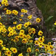 Wildflowers Honoring Mary Jabens Art Print