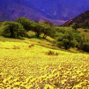 Wildflowers In The San Emigdio Mountains Art Print
