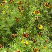 Wildflowers Nine Art Print