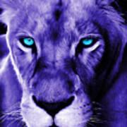 Wildlife Lion 12 Art Print