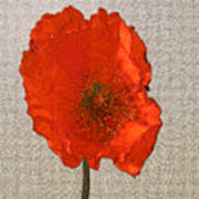 Will The Poppy In The Back Please Stand Up Art Print