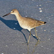 Willet And Shadow Art Print