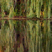 Willow Reflection Art Print