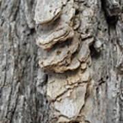 Willow Tree Bark Up Close Art Print