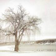 Willow Tree In Winter Art Print