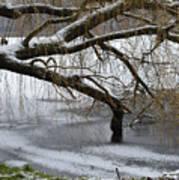 Willow Tree On The Frozen Lake Detail Art Print