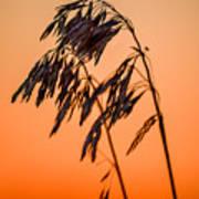 Wilting Sunset Art Print