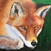 Wily Fox Art Print