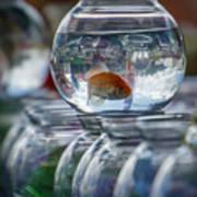 Win A Goldfish Art Print