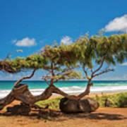 Wind Blown Tree Art Print by Brian Harig