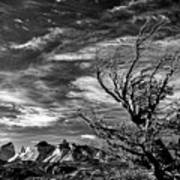 Wind Shaped Tree #2 - Patagonia Art Print