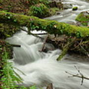 Winding Creek With A Mossy Log Art Print