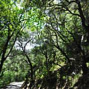 Winding Road Santa Ynez Mountains Art Print