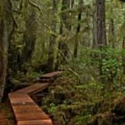 Winding Through The Willowbrae Rainforest Art Print