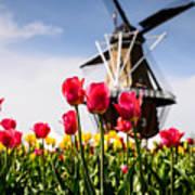 Windmill Island Tulip Gardens Art Print