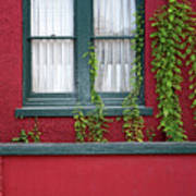 Window And Vines Art Print