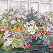 Window Box In The Sun Art Print