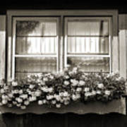 Window Flower Box 2 Art Print
