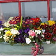 Window Flowers Art Print