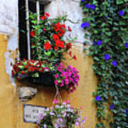 Window Garden In Arles France Art Print