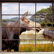 Window - Moosehead Lake Art Print