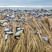 Windswept Grass At Lawrencetown Beach, Nova Scotia Art Print