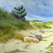 Windswept Sands Art Print