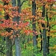 Windy Day Autumn Colors Art Print