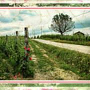 Wine And Roses. Brandini Winery Art Print