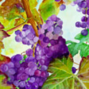 Wine Vine Art Print