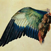 Wing Of A Blue Roller Art Print