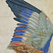 Wing Of A Blue Roller Art Print