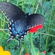Wing Spread Butterfly Art Print