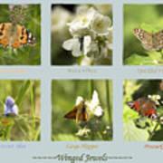 Winged Jewels Art Print