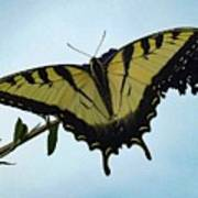Wings Are Perfect Match - Eastern Tiger Swallowtail Art Print