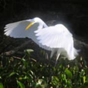 Wings Of An Angel Art Print