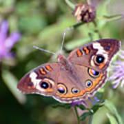 Wings Of Wonder - Common Buckeye Butterfly Art Print