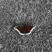 Wings On Grass Art Print