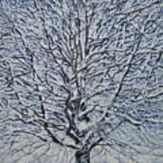 Winter '05 Art Print by Leah  Tomaino