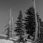 Winter Alpine Trees, Mount Rainier National Park, Washington, 2016 Art Print