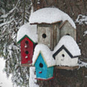 Winter Birdhouses Art Print