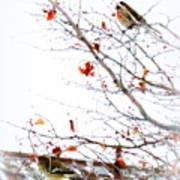 Winter Birds 1 Art Print