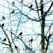 Winter Birds 2 Art Print