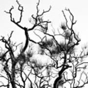 Winter... Black And White Art Print